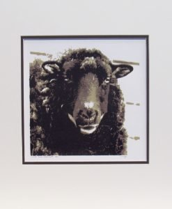 Glynis Mills, What Ewe Looking At, Screen print