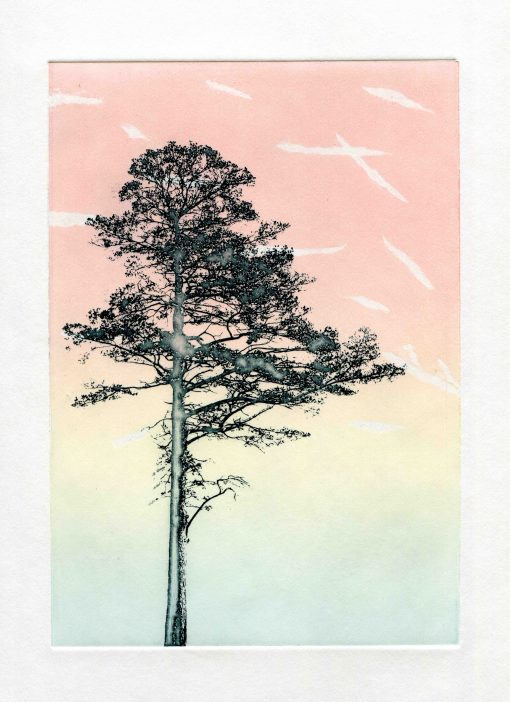 'Fir Tree (VE)' Solar plate etching by Irena Przybyl