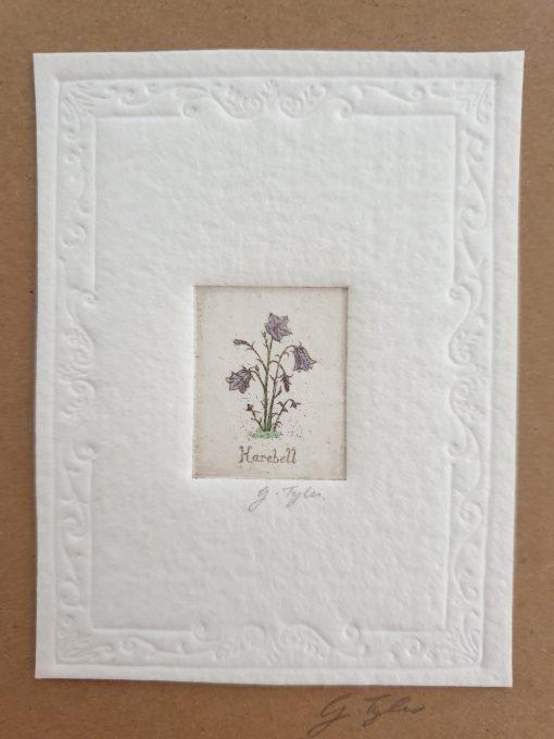 Original etching harebells by Gillian Tyler